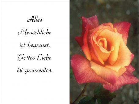 1001 Sterbebild Rose
