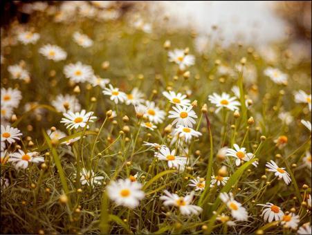287 Sterbebild Blumenwiese
