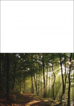 1704 Trauerkarte 4-seitig DIN A 6 nach oben, ohne Kuvert